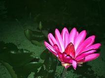 Λουλούδι σε έναν βοτανικό κήπο Στοκ φωτογραφία με δικαίωμα ελεύθερης χρήσης