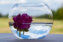 Λουλούδι σε ένα κύπελλο ψαριών στοκ φωτογραφίες με δικαίωμα ελεύθερης χρήσης
