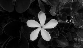 Λουλούδι σε μονοχρωματικό στοκ εικόνα με δικαίωμα ελεύθερης χρήσης