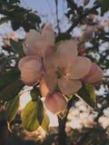 Λουλούδι σε cky στοκ εικόνες