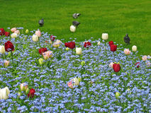 λουλούδι σπορείων στοκ φωτογραφίες