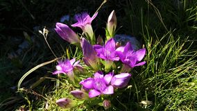 Λουλούδι στα βουνά Στοκ εικόνα με δικαίωμα ελεύθερης χρήσης