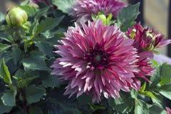 Λουλούδι στην άνθιση στοκ φωτογραφία με δικαίωμα ελεύθερης χρήσης