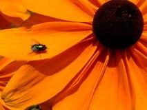 Λουλούδι στην άνθιση 16 Στοκ Φωτογραφίες