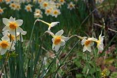 Λουλούδι στην επαρχία της Lori, Αρμενία στοκ εικόνες