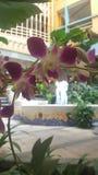 Λουλούδι στην εστίαση στοκ εικόνες