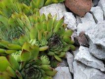 Λουλούδι στην πέτρα στοκ εικόνα με δικαίωμα ελεύθερης χρήσης