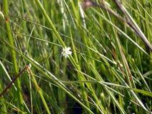 Λουλούδι στην πυκνή χλόη στοκ φωτογραφίες