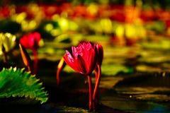 Λουλούδι στη θάλασσα στοκ εικόνα με δικαίωμα ελεύθερης χρήσης