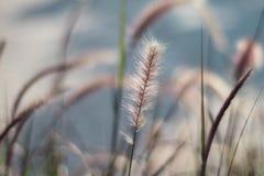 Λουλούδι στη χλόη και το φως του ήλιου Στοκ Εικόνες