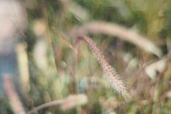 Λουλούδι στη χλόη και το φως του ήλιου Στοκ Εικόνα