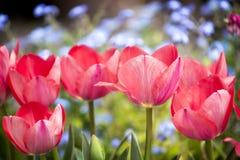 Λουλούδι στις μπλε θαμπάδες Στοκ φωτογραφία με δικαίωμα ελεύθερης χρήσης