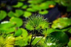 Λουλούδι στον κήπο στοκ εικόνα με δικαίωμα ελεύθερης χρήσης