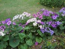 Λουλούδι στον τομέα στοκ φωτογραφία με δικαίωμα ελεύθερης χρήσης