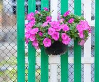 Λουλούδι στο δοχείο στην ξύλινη φραγή Στοκ εικόνες με δικαίωμα ελεύθερης χρήσης