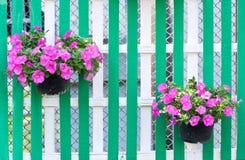 Λουλούδι στο δοχείο στην ξύλινη φραγή Στοκ Φωτογραφία