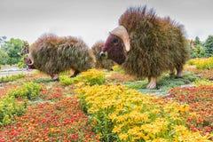 Λουλούδι στο πάρκο Στοκ Φωτογραφίες