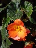 Λουλούδι στο πάρκο στοκ εικόνα με δικαίωμα ελεύθερης χρήσης