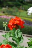 Λουλούδι στο πεδίο στοκ εικόνα με δικαίωμα ελεύθερης χρήσης
