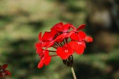 Λουλούδι στο πεδίο στοκ φωτογραφίες με δικαίωμα ελεύθερης χρήσης
