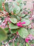 Λουλούδι στο ροζ στοκ φωτογραφία με δικαίωμα ελεύθερης χρήσης