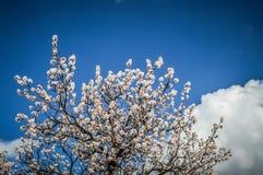 Λουλούδι στο σαφή ουρανό στις καπνοδόχους νεράιδων σε Goreme στοκ εικόνες