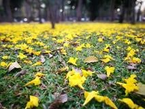 Λουλούδι στο υπόβαθρο κήπων Στοκ φωτογραφίες με δικαίωμα ελεύθερης χρήσης