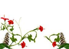 λουλούδι συνόρων φρέσκο Στοκ Εικόνες