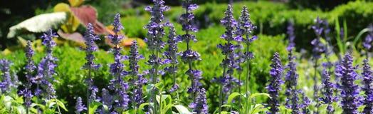 λουλούδι συνόρων Στοκ Εικόνες