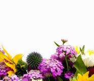 λουλούδι συνόρων Στοκ εικόνα με δικαίωμα ελεύθερης χρήσης