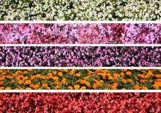 λουλούδι συνόρων Στοκ εικόνες με δικαίωμα ελεύθερης χρήσης