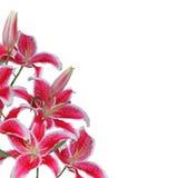 λουλούδι συνόρων Στοκ φωτογραφία με δικαίωμα ελεύθερης χρήσης