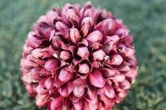 λουλούδι σφαιρών Στοκ εικόνες με δικαίωμα ελεύθερης χρήσης