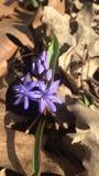 Λουλούδι την άνοιξη Στοκ Εικόνα