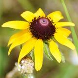 Λουλούδι της Αλαμπάμα Στοκ φωτογραφία με δικαίωμα ελεύθερης χρήσης
