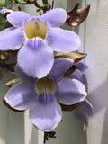 Λουλούδι της Κόστα Ρίκα Στοκ Φωτογραφία