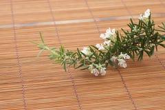 Λουλούδι της Rosemary Στοκ Φωτογραφία