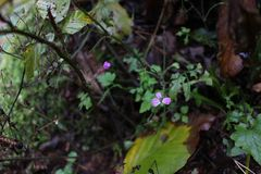 Λουλούδι του Forrest Στοκ Φωτογραφίες