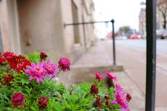 Λουλούδι το χειμώνα στοκ εικόνες με δικαίωμα ελεύθερης χρήσης