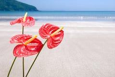 λουλούδι τροπικό Στοκ φωτογραφίες με δικαίωμα ελεύθερης χρήσης