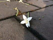 Λουλούδι φελλού στοκ φωτογραφίες