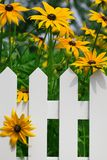 λουλούδι φραγών Στοκ εικόνα με δικαίωμα ελεύθερης χρήσης
