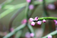 Λουλούδι φρούτων φύσης Στοκ φωτογραφίες με δικαίωμα ελεύθερης χρήσης