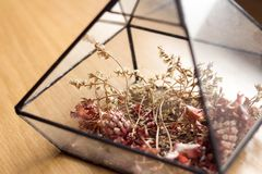 Λουλούδι, φύση, υπόβαθρο Στοκ εικόνα με δικαίωμα ελεύθερης χρήσης