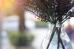 Λουλούδι, φύση, υπόβαθρο Στοκ εικόνες με δικαίωμα ελεύθερης χρήσης