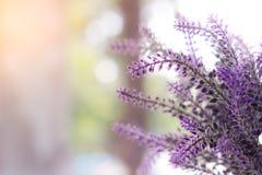 Λουλούδι, φύση, υπόβαθρο Στοκ Εικόνες