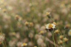 λουλούδι 2 χλόης στοκ φωτογραφία με δικαίωμα ελεύθερης χρήσης