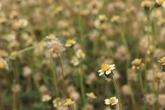 Λουλούδι 3 χλόης στοκ φωτογραφία με δικαίωμα ελεύθερης χρήσης