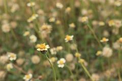 Λουλούδι 4 χλόης στοκ εικόνες