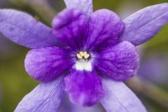 Λουλούδι χωρίς εστίαση Στοκ φωτογραφία με δικαίωμα ελεύθερης χρήσης